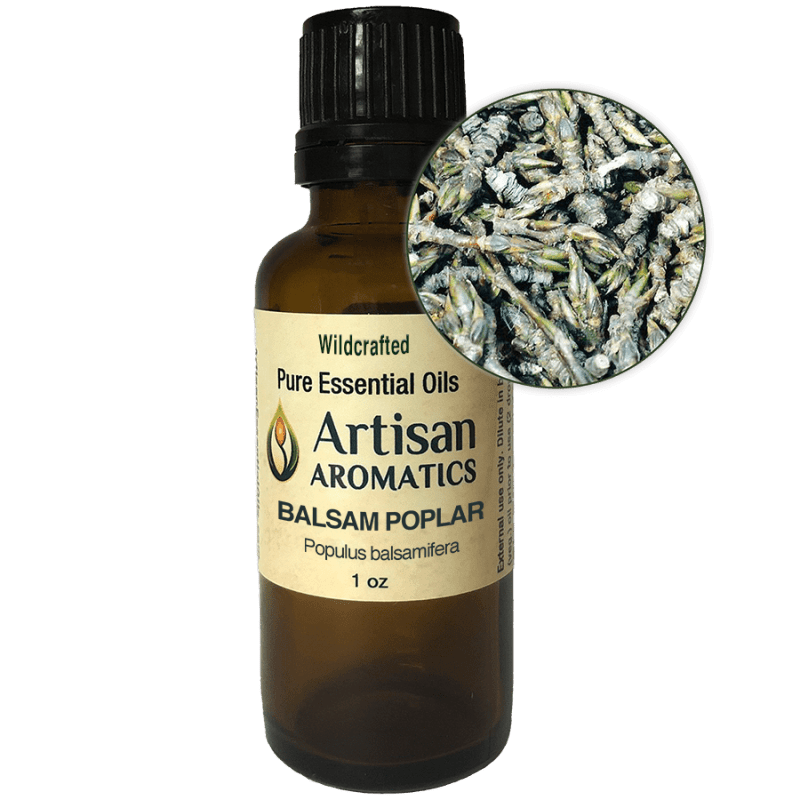Balsam Poplar Essential Oil