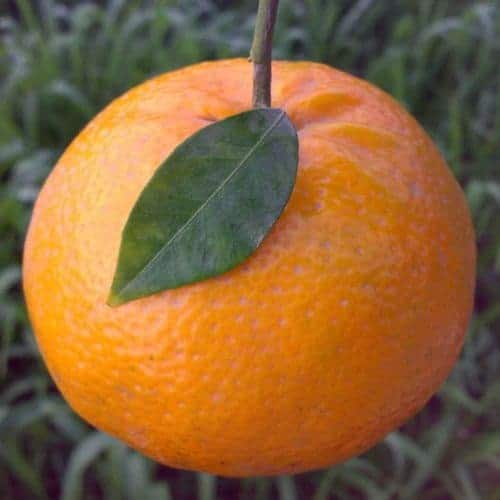 Mandarin Essential Oil (Green)