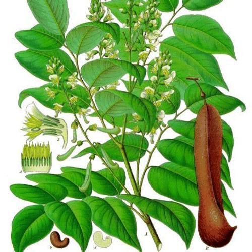 Balsam Peru Essential Oil | Balsam Peru Resinoid