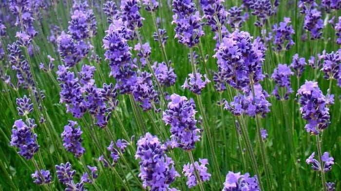 What is Aromatherapy? - Artisan Aromatics