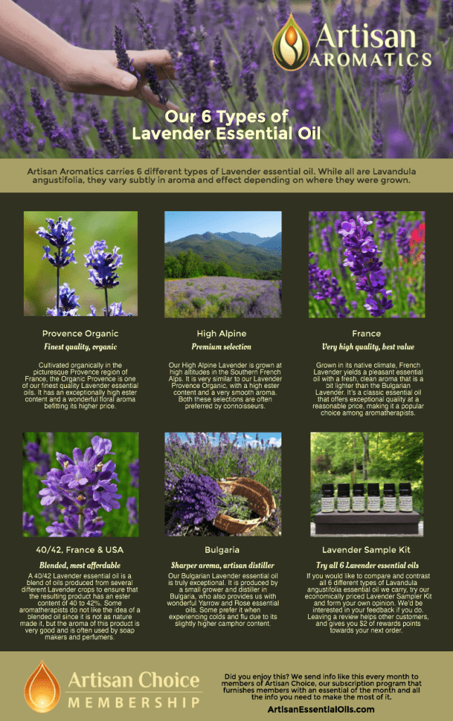 Our 6 Types of Lavender Essential Oil [Infographic] - Artisan Aromatics