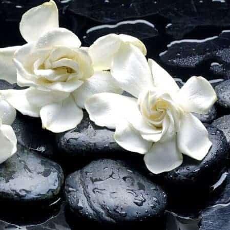 Gardenia Enfleurage Organic Limited Edition