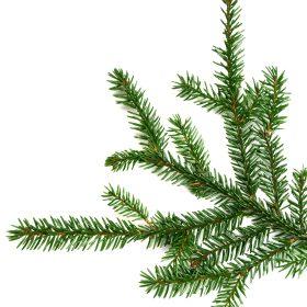 Black-Spruce-Essential-Oil-Artisanal-Artisan-Aromatics
