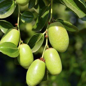 Clear Jojoba Oil Organic Artisan Aromatics